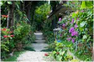 家庭菜園4