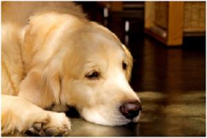 犬マナー違反2