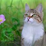 猫のノミが、部屋にも大量発生!!刺されてとても痒い…そんな時のノミ退治の対策!