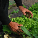砂利だらけの庭を花壇や菜園に変えるには!?